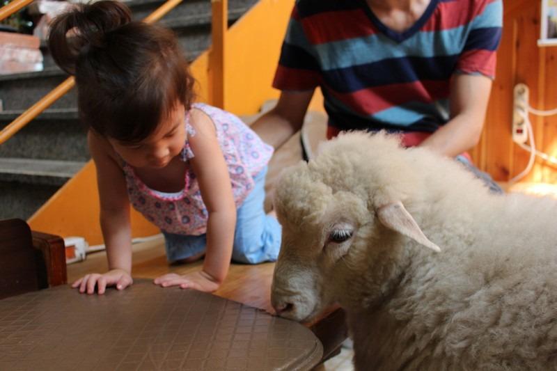 Hongdae, Seoul, Korea: Nature Thanks Sheep Cafe