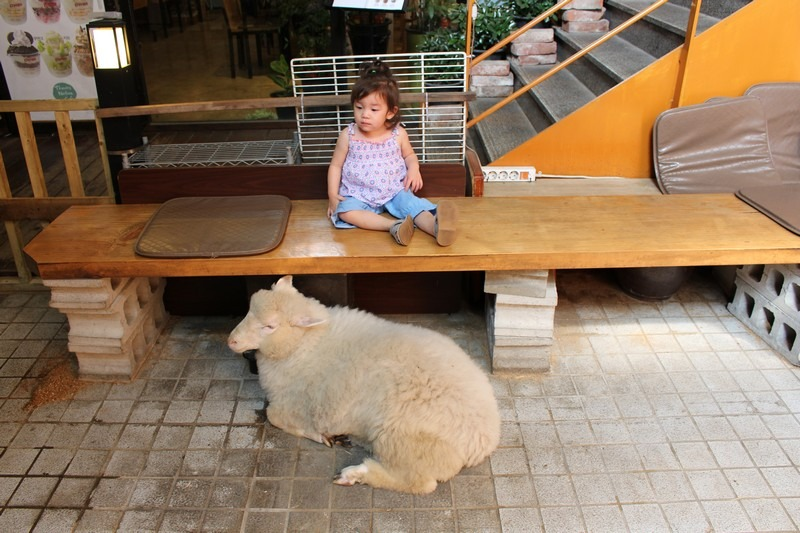 Hongdae, Seoul, Korea: Nature Thanks Sheep Cafe