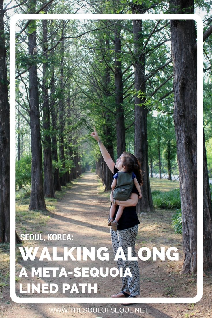 Walking Along a Meta-Sequoia Lined Path, World Cup Park, Seoul, Korea