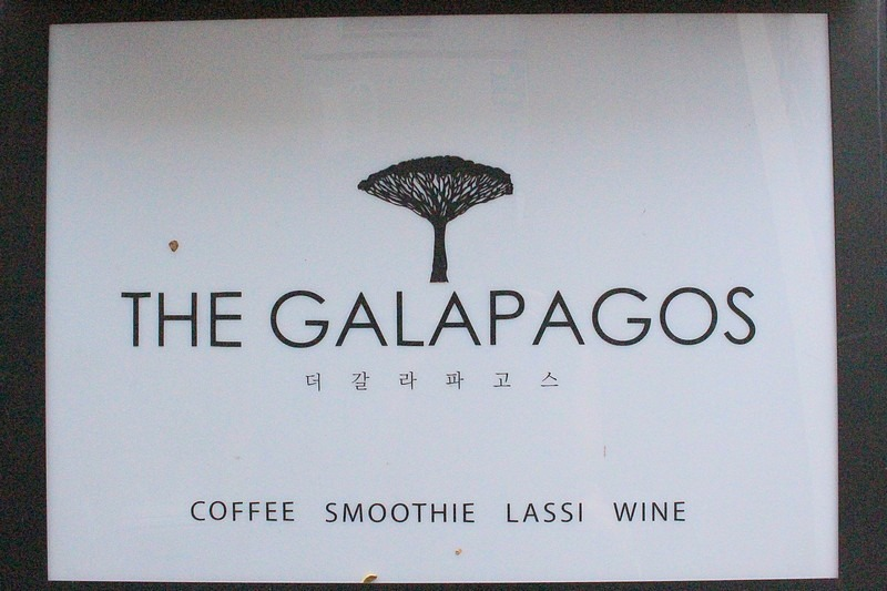 The Galapagos Cafe, Hongdae, Seoul, Korea