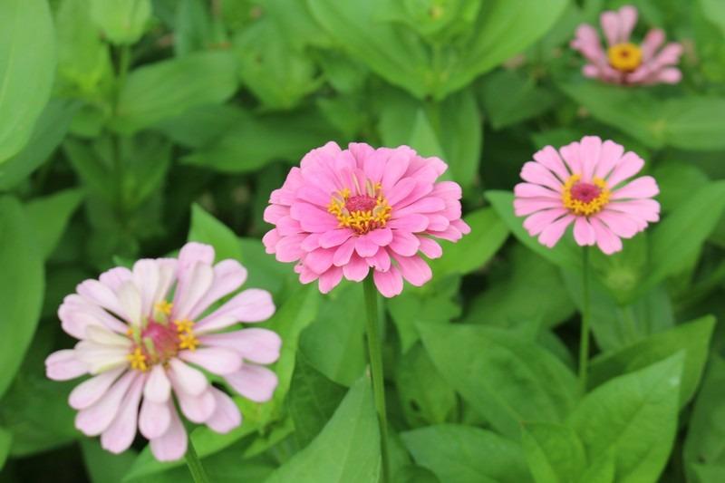 flowers at Nanji Stream Park, Seoul, Korea
