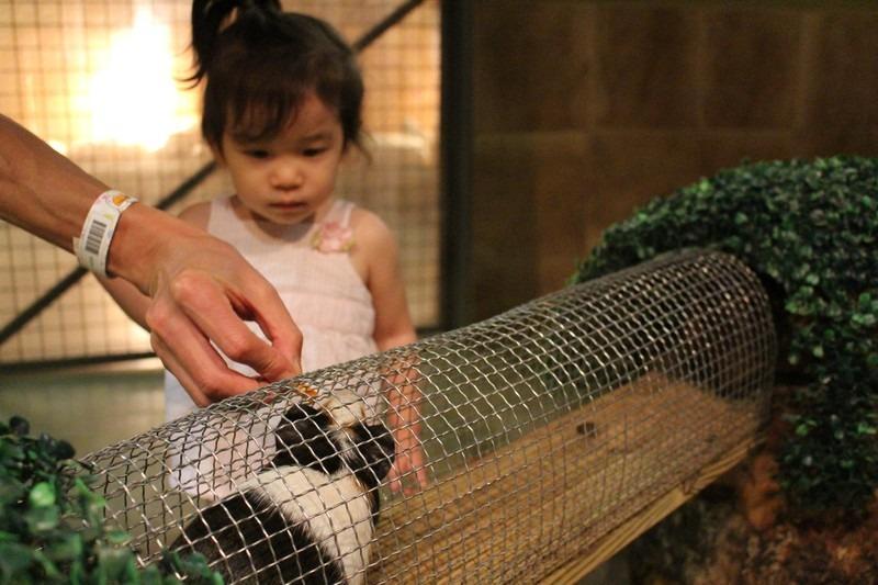 Zoolung Zoolung, Ilsan, Korea, petting zoo