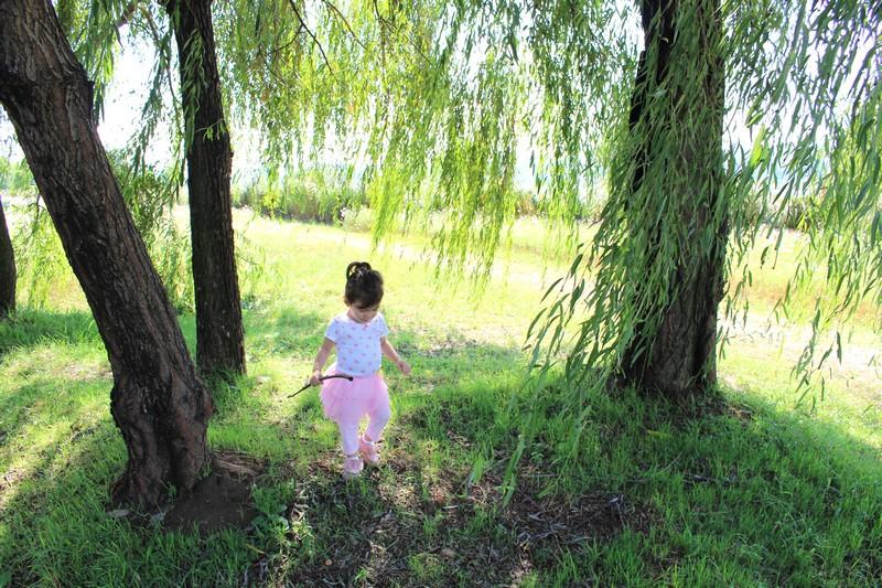 Nanji Hangang Park, World Cup Park, Mapo-gu, Seoul, Korea: Cosmos Field: baby under a willow tree