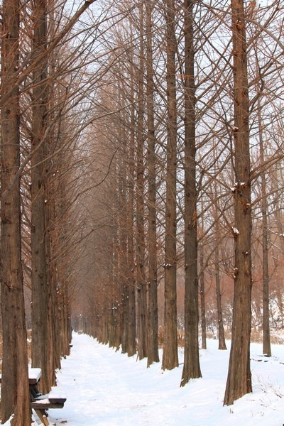 Snow in Seoul, World Cup Park, Seoul, Korea