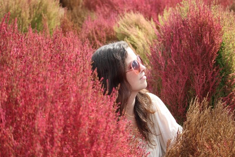 Nari Park, Yangju, Korea: Autumn Flowers, Hallie Bradley