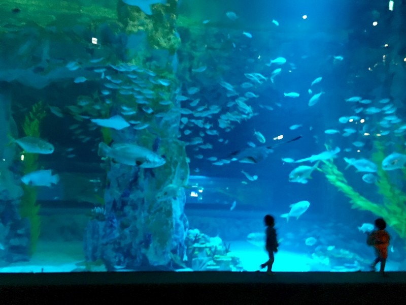 Lotte World Mall Aquarium - TravelStained