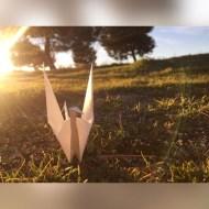 Día 56 - Con las alas al sol