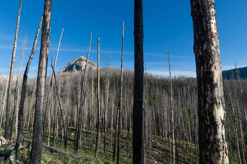 Charred trees from a 2005 wildfire in the Sawtooth National Recreation Area in Idaho. Photo: Steve Hymon.