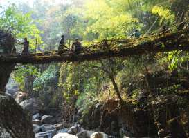 A living root bridge in India. Photo by Anselmrrogers, via Wikimedia Commons.