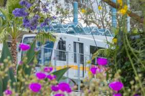 Palms Station seen through a flowerbed.