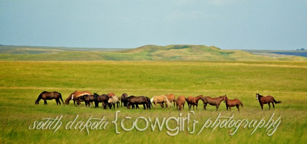 Scatter Butte, South Dakota Cowgirl Photography, Limited Edition