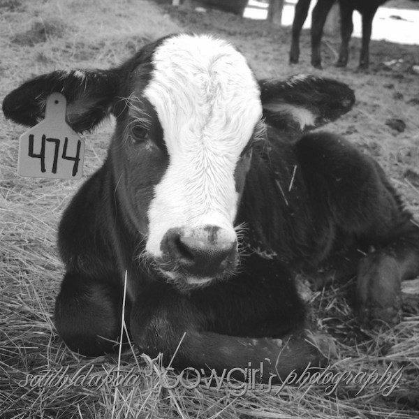 the south dakota cowgirl, south dakota cowgirl photography