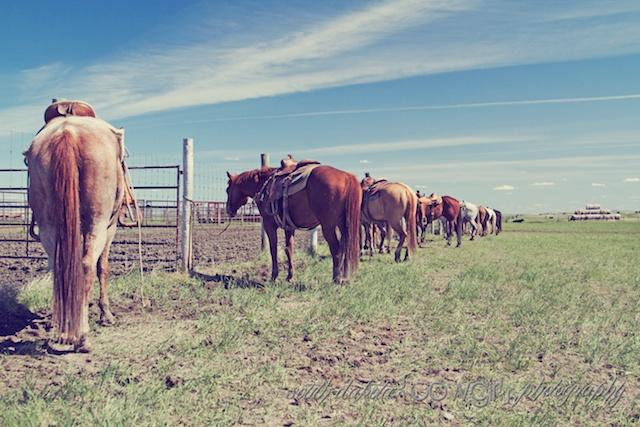 south dakota cowgirl photography, branding pen photos, equine photos, ranch life photos