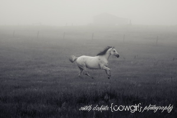 South Dakota Cowgirl Photography, south dakota cowgirl, horses, equine portraits, equine photography