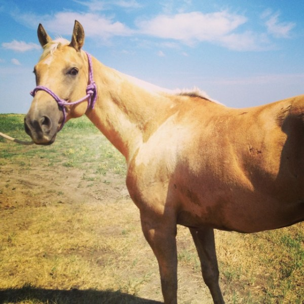 horses, south dakota cowgirl photograph