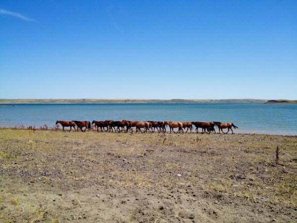horses, south dakota cowgirl photography, ranch life