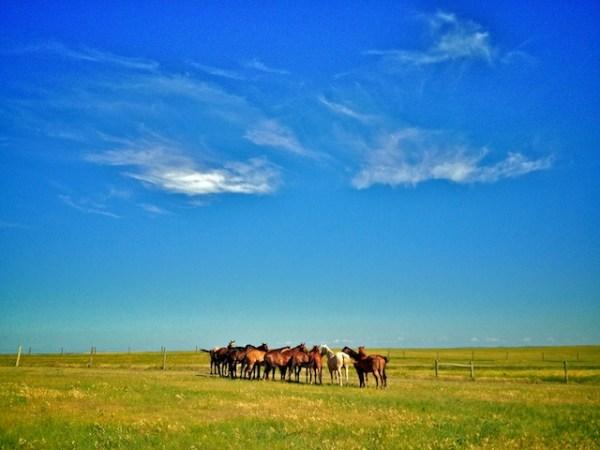 horses, ranch life, saddle horses, south dakota cowgirl photography