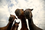 south dakota cowgirl photography, south dakota cowgirl, the south dakota cowgirl, equine photography, equine photographers
