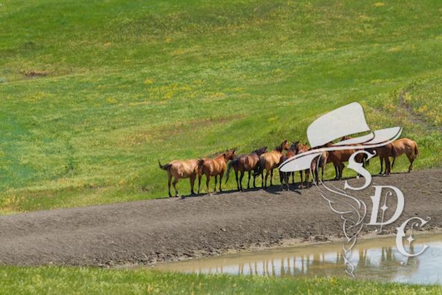 south dakota cowgirl photography, equine photography, south dakota photographers, south dakota photography, ranch life, ranching, horses, equine photography
