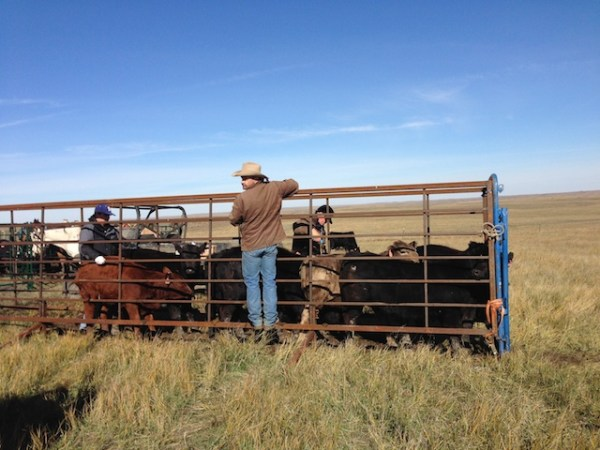 fall shots on the ranch, fall shots, ranch life, this is ranching, south dakota ranching, what is life like on a ranch, working ranch, horses