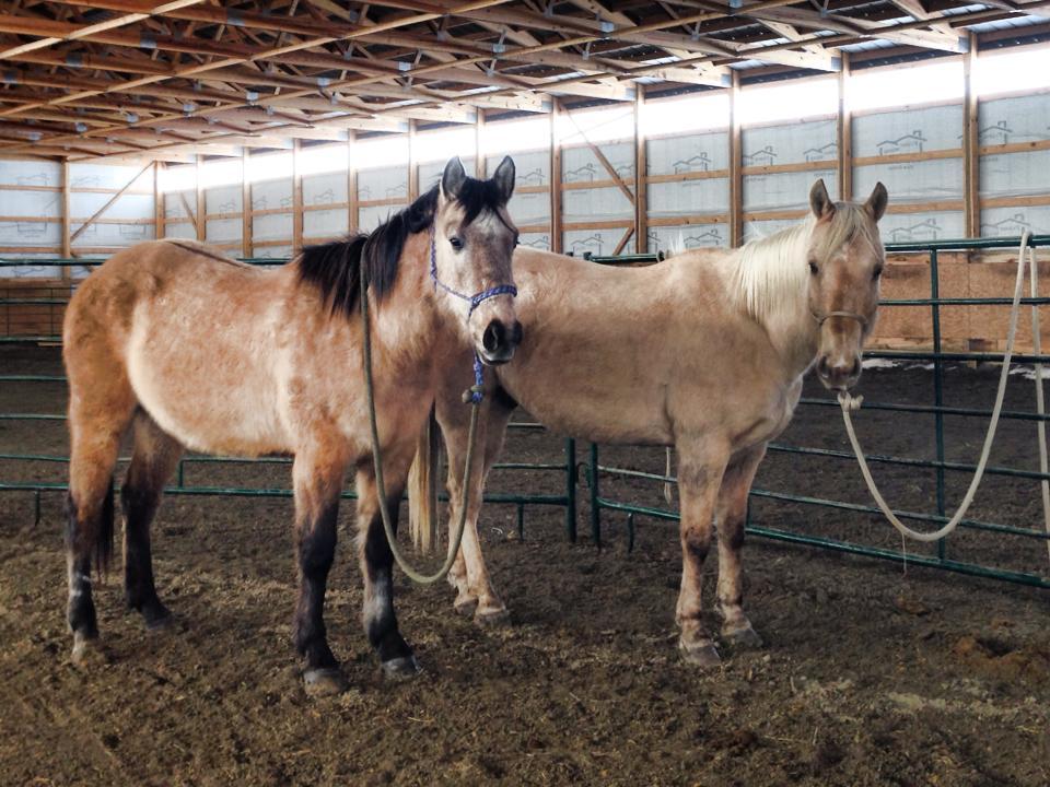 South Dakota Cowgirl horses, the south dakota cowgirl, my horses, boys, pretty horses