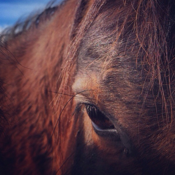 south dakota cowgirl photography, instagram, photography, horses,