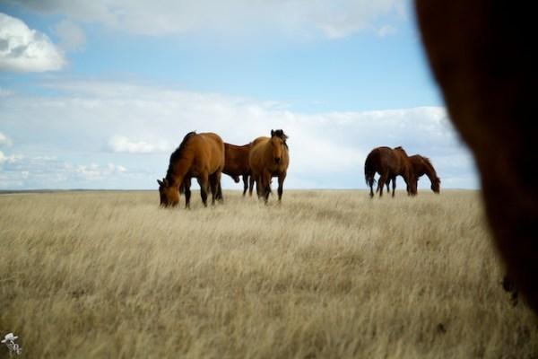 south dakota cowgirl photography, ranch lands, ranching photography, equine photography, south dakota equine photographers, the south dakota cowgirl