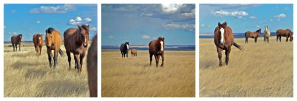 horse photos, equine photos, ranch photos, ranch horses, south dakota horses, south dakota ranches