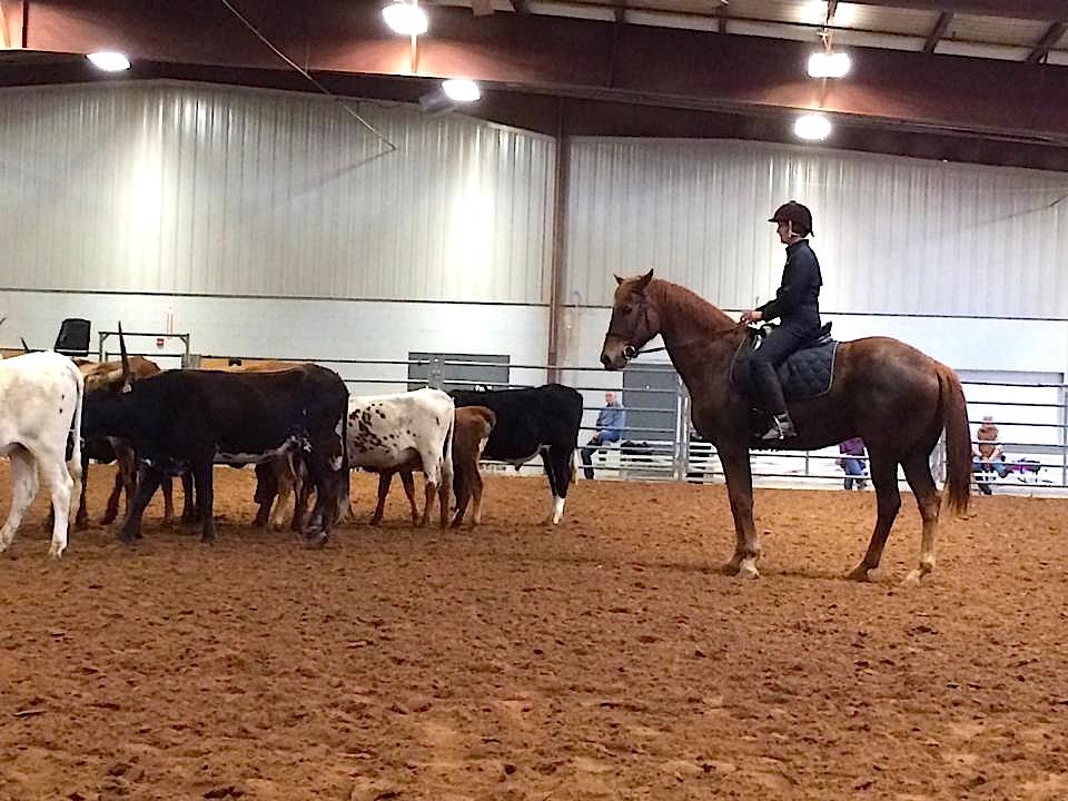 Lynn Reardon, Lope Texas, Santo, Buck Brannaman Clinic