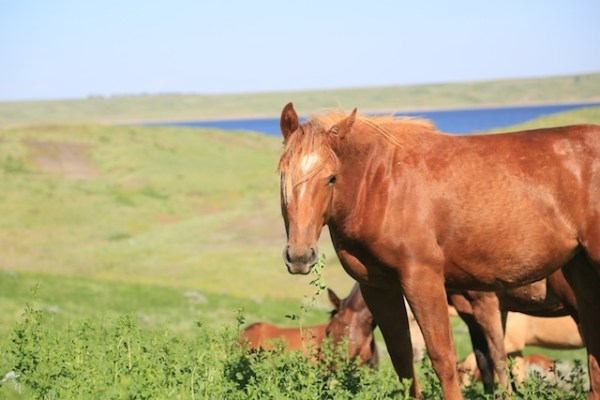 south dakota cowgirl photography, south dakota horses, south dakota ranching, equine photos, horses in a natural setting, spring