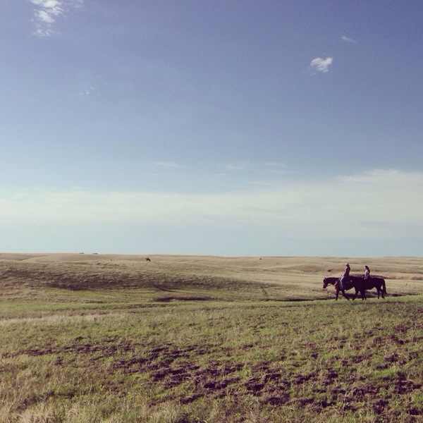 riders on the prairie, gathering cattle, ranching photos, south dakota cowgirl photography