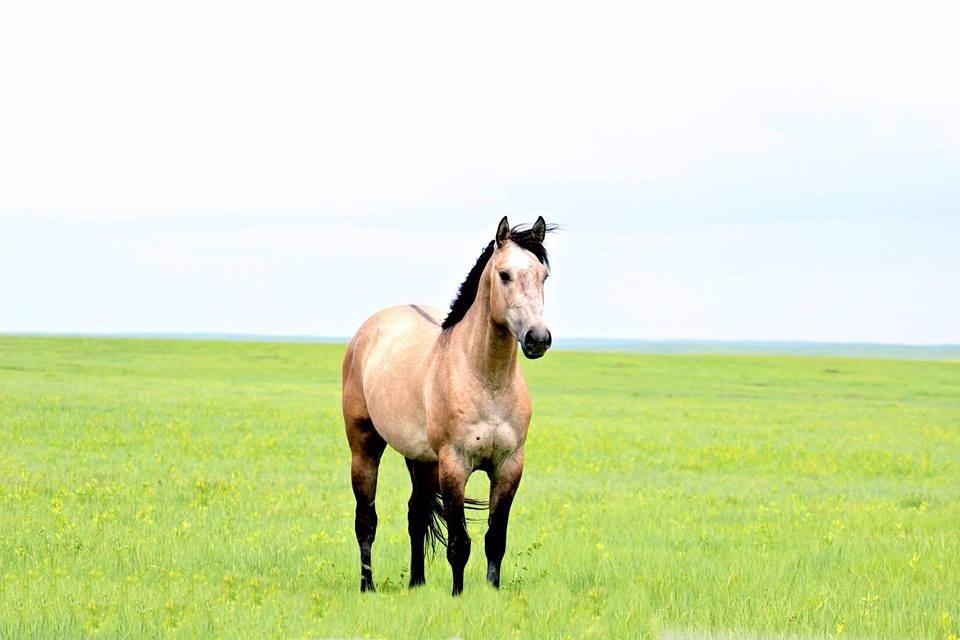 South dakota cowgirl photography, horses