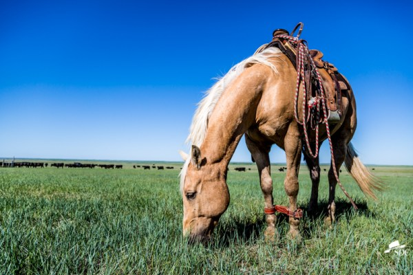 life on the ranch through my lens, home for the south dakota cowgirl, ten things to love about ranch life