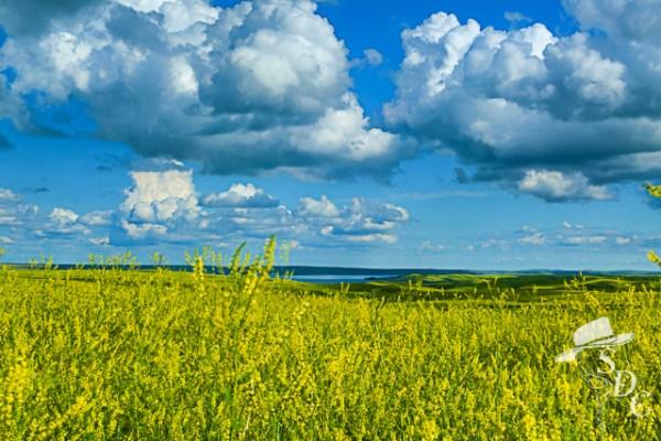 south dakota, south dakota cowgirl photography, south dakota landscape photography, the dx ranch,