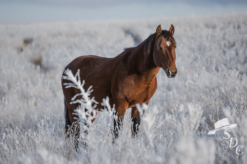south dakota cowgirl photography, horses in the winter, snow photos of horses, equine photography, south dakota winter