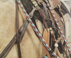 Colt Cam 2016 – Get your horse ready to bridle