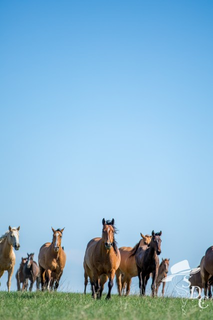 mares on the DX Ranch