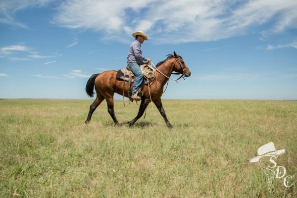 Zach Ducheneaux riding Poco Tivio Pep, Herd sire at The DX Ranch.