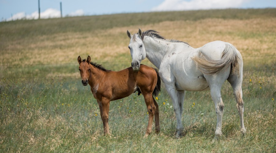 mare and foal, horses, south dakota cowgirlphotography
