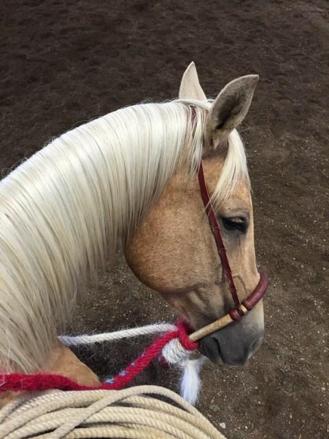 riding with buck, buck clinic, hackamore horse, horsemanship, horses