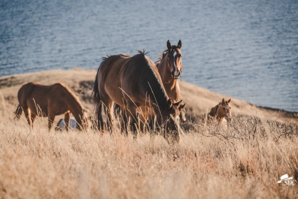 Horses, pretty light, south dakota cowgirl photography