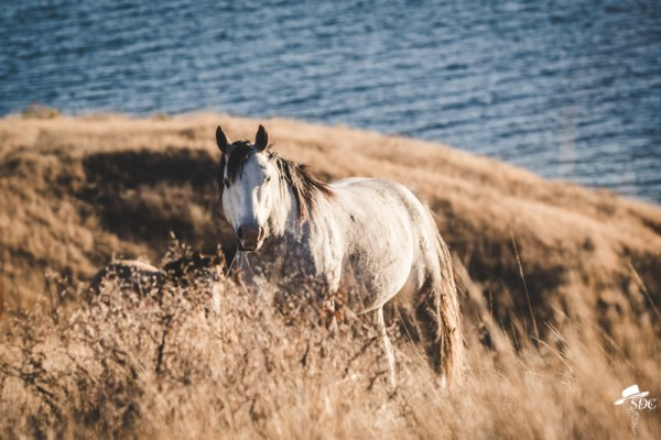 Pretty Light, South Dakota Cowgirl Photography, Gray Horse