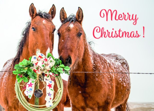 Merry Christmas from The South Dakota Cowgirl