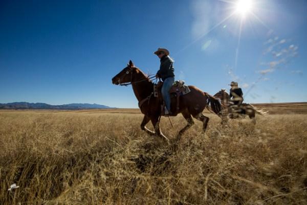 cirlce z ranch arizona