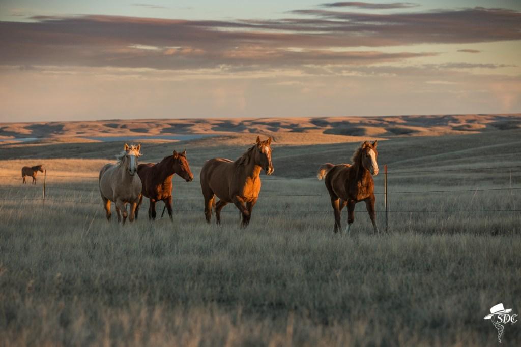 western wordless wednesday, the south dakota cowgirl, south dakota cowgirl photography, equine photography, ranch horses