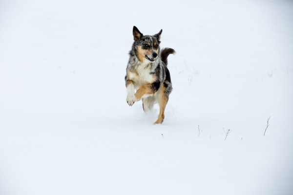 the south dakota cowgirl, south dakota cowgirl photography, dogs in the snow, winter in south dakota, winter dogs, cow dogs