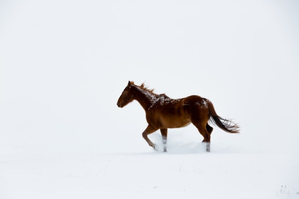 the south dakota cowgirl, south dakota cowgirl photography, horses in the snow, winter in south dakota, winter horses