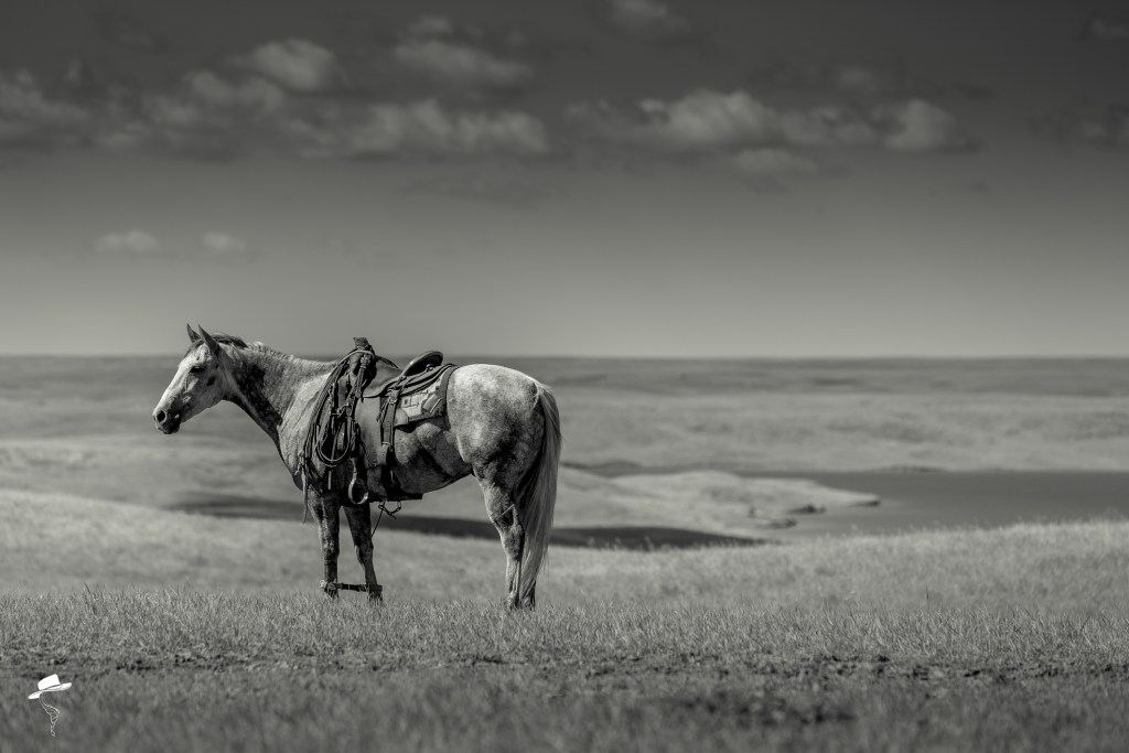 south dakota cowgirl photography, black and white photography, what is photography, photography 101, photography editing tips and tricks