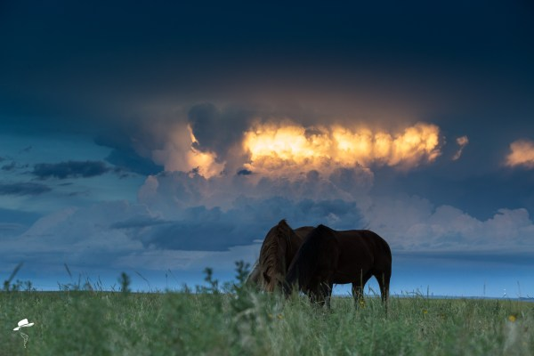 photography 101, photography tutorials, the south dakota cowgirl, south dakota cowgirl photography