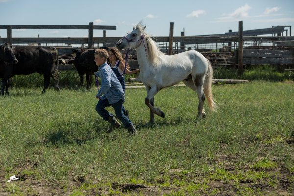 branding photos, south dakota cowgirl photography, kids and a pony, kids and ponies
